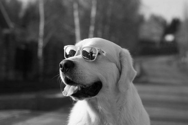 Toutes les lunettes